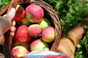 Apple picking for gluten free apple crisp recipe