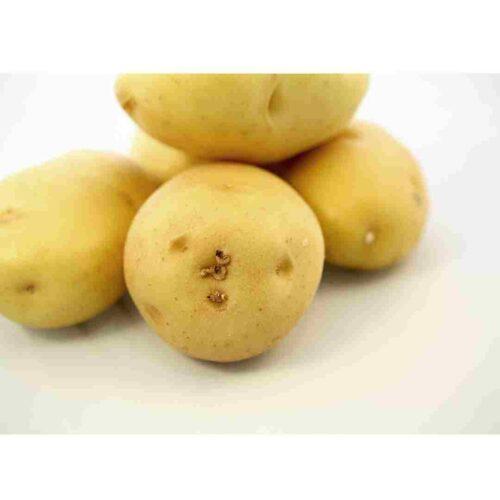 Yukon gold potatoes for low FODMAP potato salad